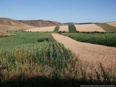 Agricoltura ed internazionalizzazione delle imprese meccanicheimentare in Romania