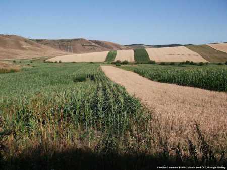 Agricoltura ed agroalimentare in Romania: vi sono molte possibilita'