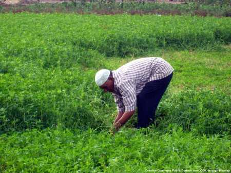 In Egitto vi sarebbero grandi possibilita' per le aziende italiane - anche PMI che operano nell'agroalimentare. Tuttavia, la politica estera italiana verso l'Egitto e' ben poco comprensibile