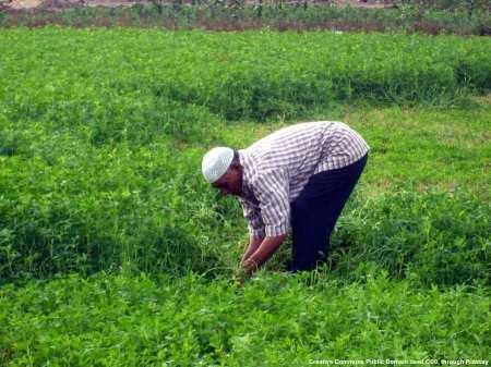 Il settore agroalimentare e' estremamente importante in Egitto