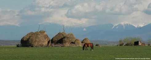Ortaggi ed agroalimentare in Romania