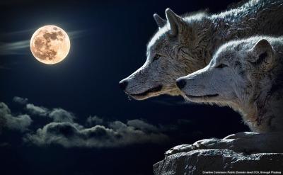 L'intellighenzia UE ha gridato Al lupo?