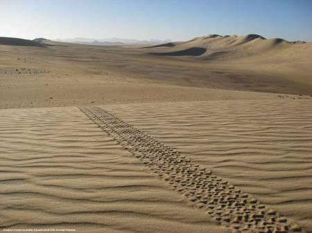 L'Algeria ha un lungo confine in comune con il sud della Libia