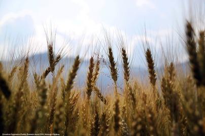 Export del grano e geopolitica