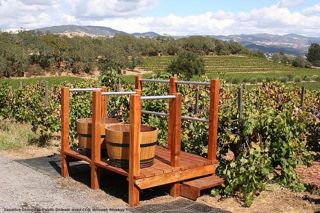 Export del vino made in Italy: potrebbe essere molto di piu'