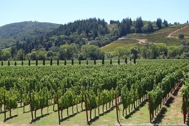 Export del vino: esattamente come un buon trattamento dei vigneti, una buona consulenza - anche temporanea - e' fondamentale per valorizzare il vostro prodotto