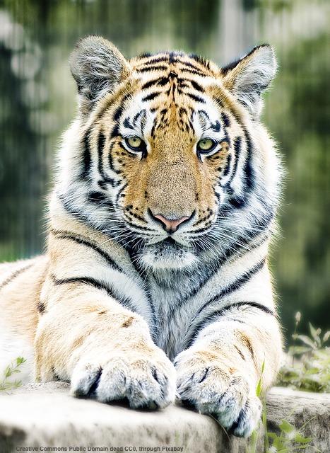 Vedo come sempre probabile un balzo della tigre populista, che potrebbe perfino fare un sol boccone delle élites europee
