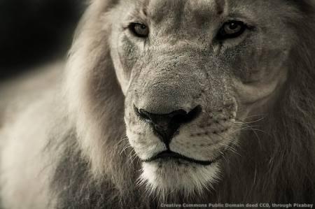 Per fare export occorre essere leoni, non tigri